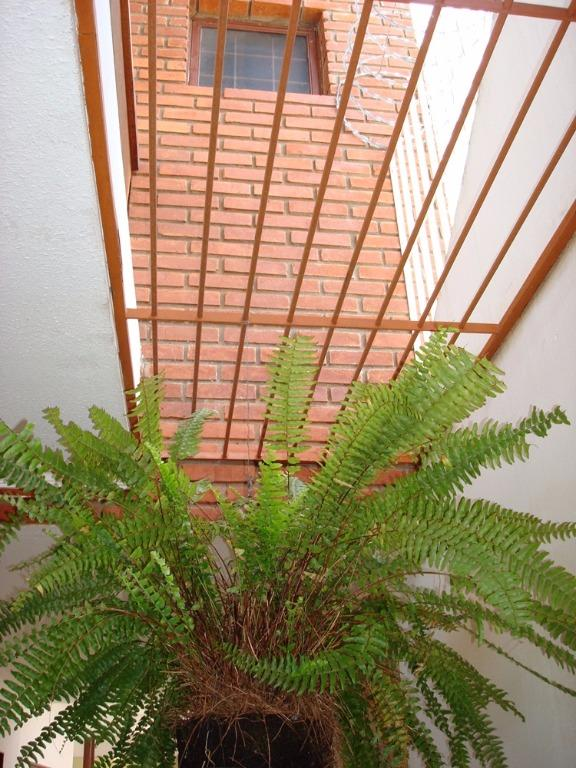 Casa 3 Dorm, Jardim Tremembé, São Paulo (SO1276) - Foto 16