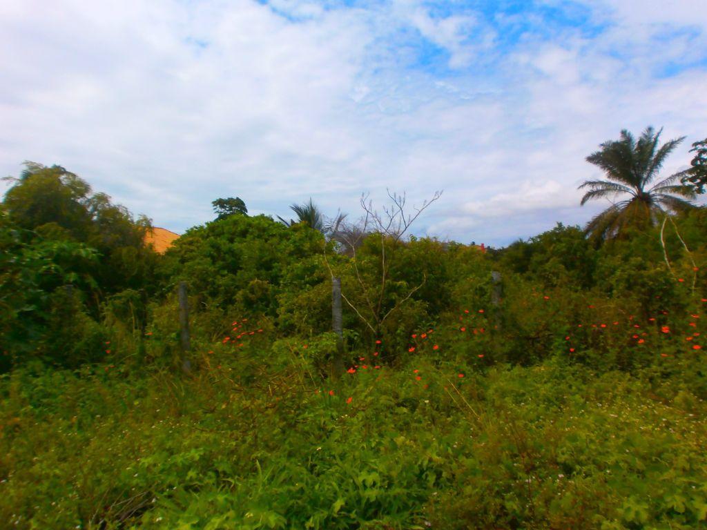 Terreno perto da Praia de Carapibus, Conde.