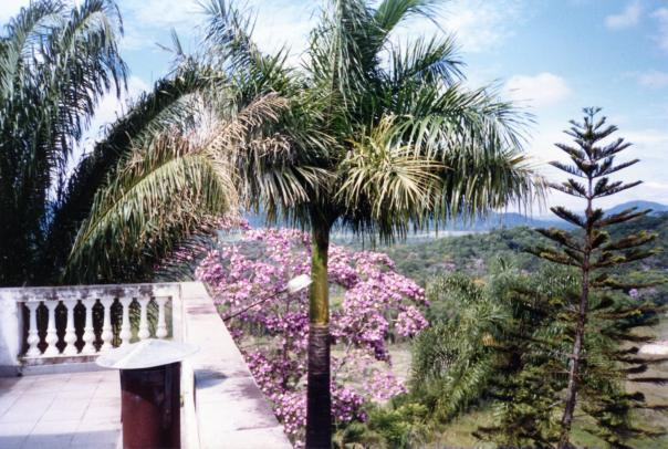 Soute Imóveis - Terreno, Rocil, Iguape (AR0371) - Foto 8