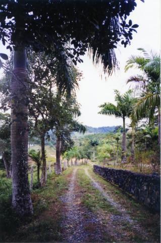 Soute Imóveis - Terreno, Rocil, Iguape (AR0371) - Foto 5