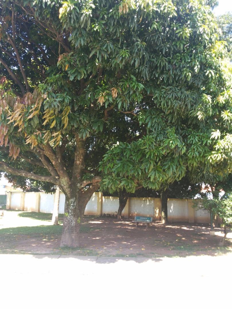 Soute Imóveis - Casa 3 Dorm, Jardim Adriana - Foto 5