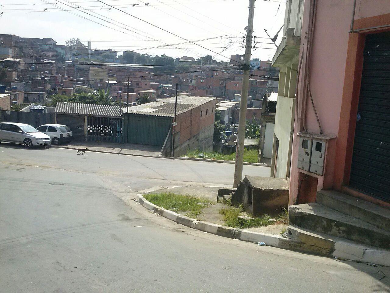Terreno, Cidade Tupinambá, Guarulhos (TE0328) - Foto 2