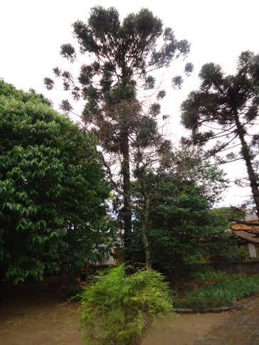 Terreno, Macedo, Guarulhos (AR0131) - Foto 13