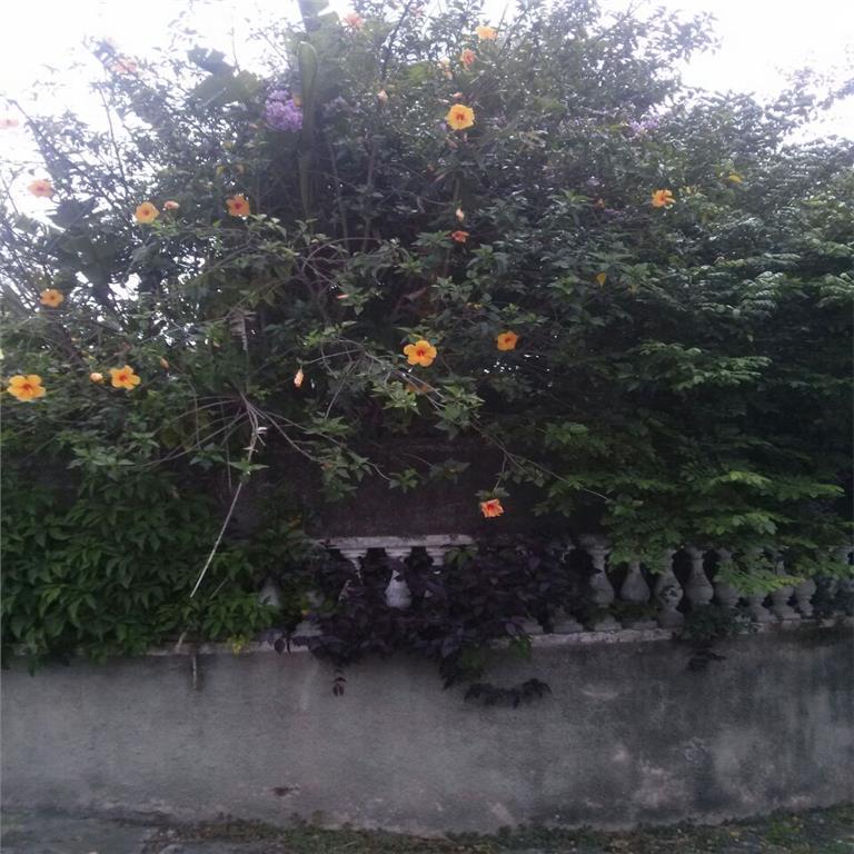 Terreno, Jardim Guanca, São Paulo (TE0310) - Foto 9