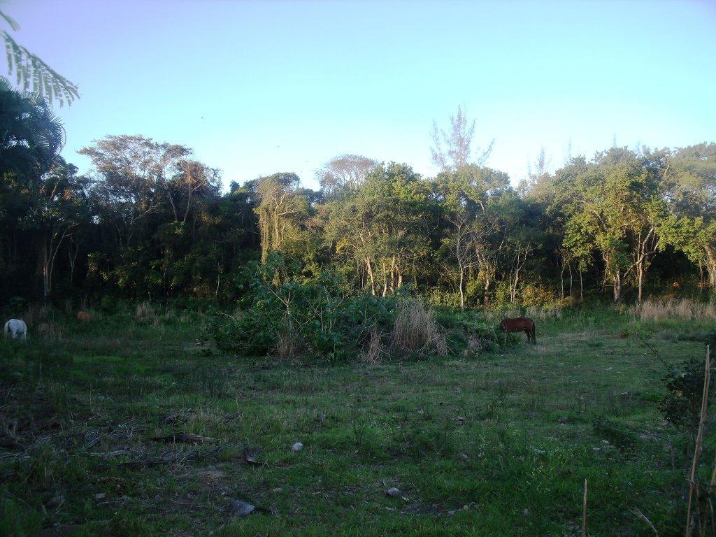 Lote/Terreno em Hospício  -  Araruama - RJ