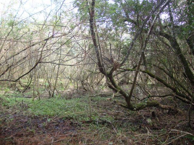 Terreno, Espigão, Viamão (AR0003) - Foto 14