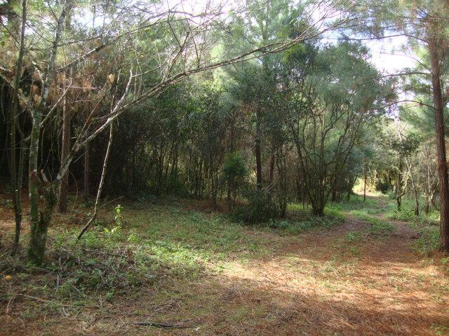 Terreno, Espigão, Viamão (AR0003)