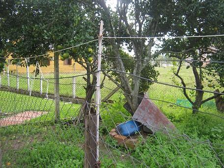 Casa 4 Dorm, Lami, Porto Alegre (CA0400) - Foto 2