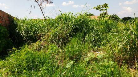 Terreno à venda em Jardim Santa Maria Ii, Campinas - SP