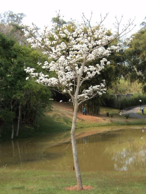 TERRENO Dois Córregos | D'Lange Imóveis em Campinas