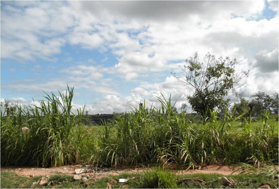 Terreno à venda em Jardim Myrian Moreira Da Costa, Campinas - SP