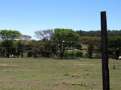 Área  João Aranha  Paulínia