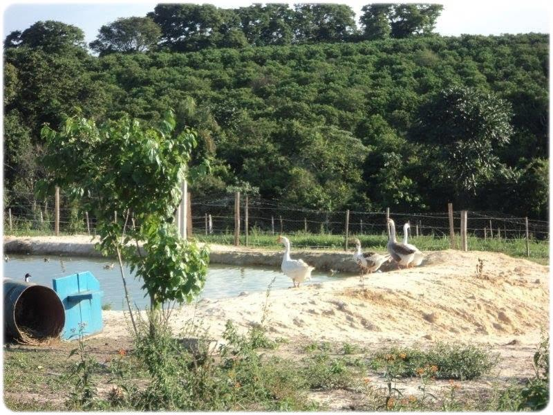 Sítio de 6 dormitórios à venda em Condomínio Ecovila, Artur Nogueira - SP