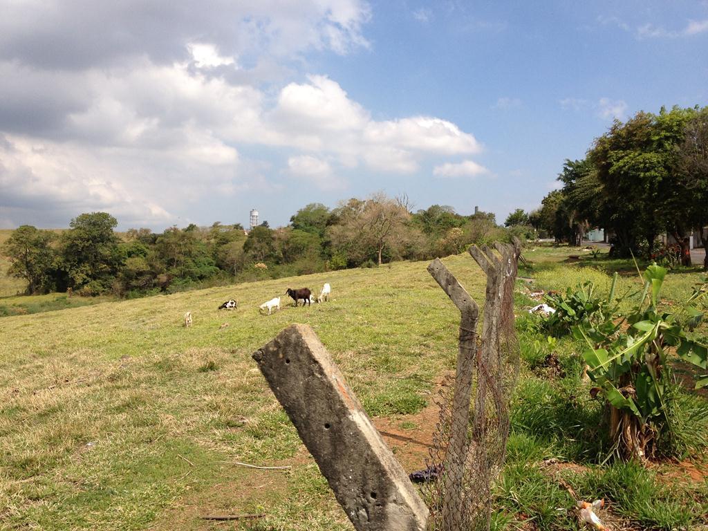 Terreno à venda em Vila Trinta E Um De Março, Campinas - SP