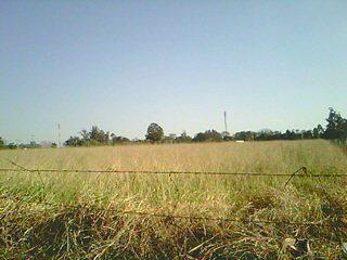 Área à venda em Bosque, Nova Odessa - SP