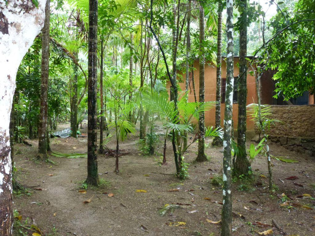 Terreno residencial à venda, Cocaia, Ilhabela.