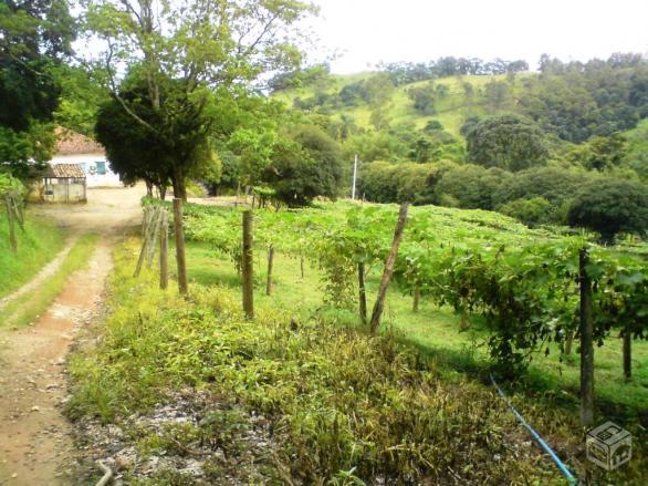 Sítio rural à venda, Vila Nova, Amparo.