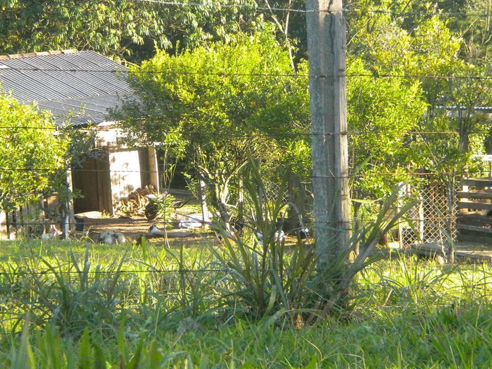 Ch�cara Costa do Morro Sapucaia do Sul