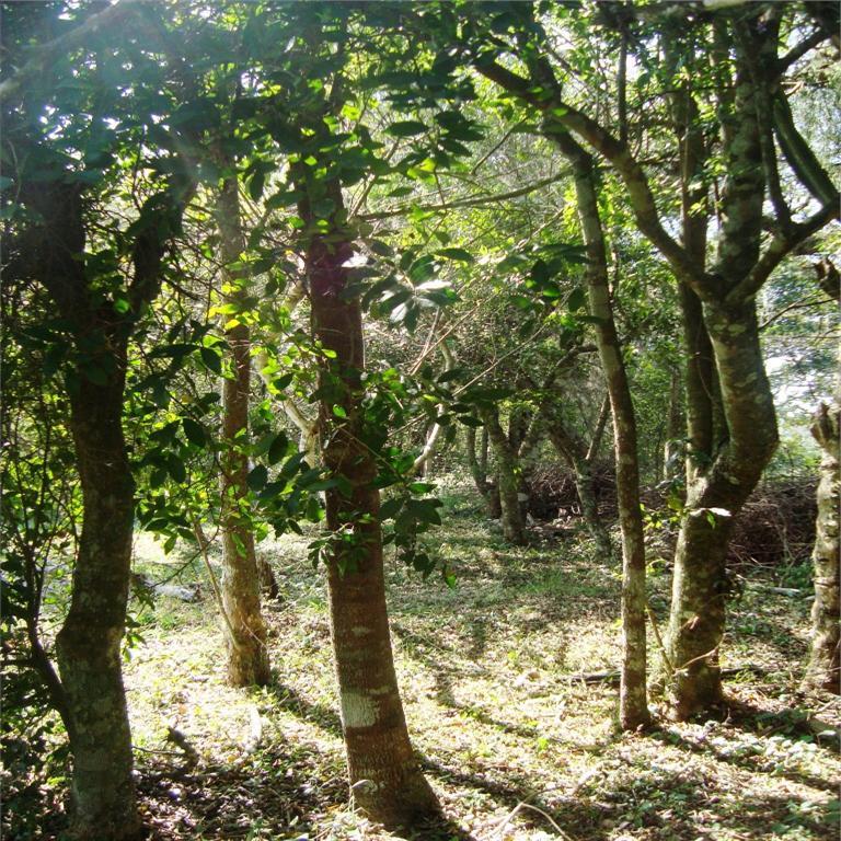 Terreno, Bosques do Sul, Gravataí (TE0236) - Foto 6
