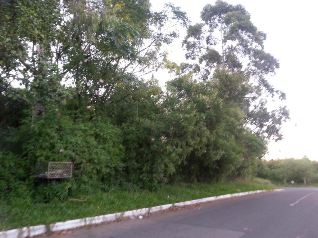N Grupo - Terreno, Mato Alto, Gravataí (TE0412) - Foto 4