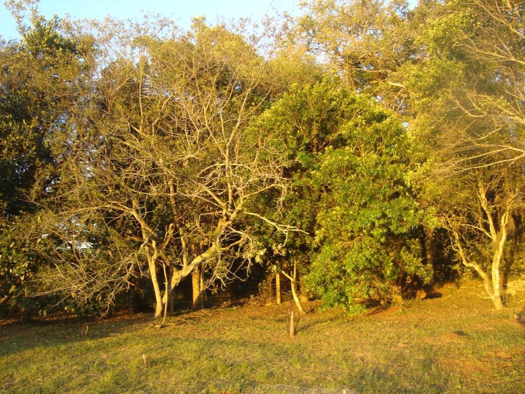 Terreno, Bosques do Sul, Gravataí (TE0236) - Foto 9