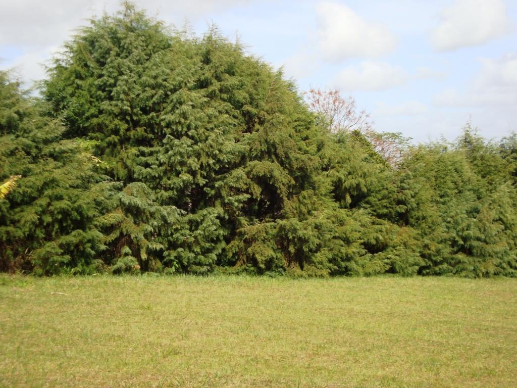 Terreno, Bosques do Sul, Gravataí (TE0236) - Foto 4