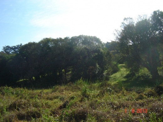 Terreno, Paragem dos Verdes Campos, Gravataí (TE0231) - Foto 12