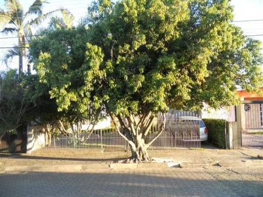 Casa 5 Dorm, Jardim Figueira, Gravataí (CA0545) - Foto 3