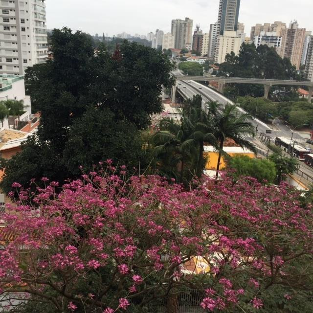 Apto 2 Dorm, Campo Belo, São Paulo (AP16705) - Foto 10