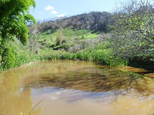 Fazenda / Sítio à venda em Secretário, Petrópolis - RJ - Foto 9