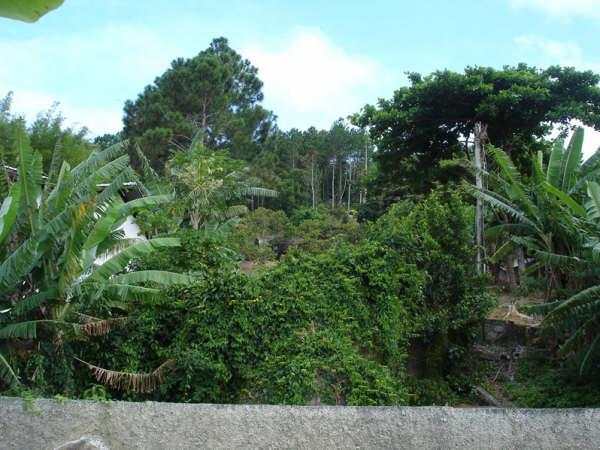 Terreno, Cacupé, Florianópolis (TE0219) - Foto 11