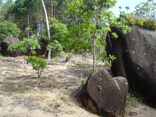 Terreno, Cacupé, Florianópolis (TE0219) - Foto 7