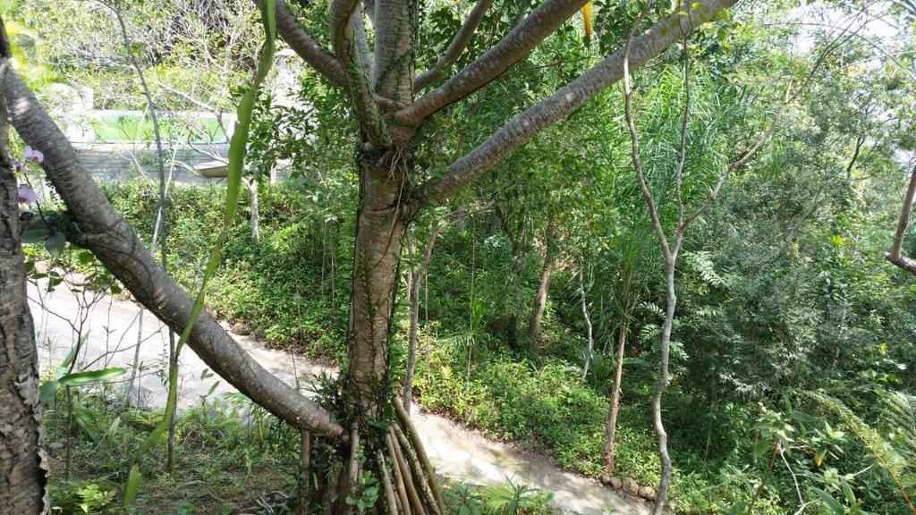 Terreno, Sambaqui, Florianópolis (TE0262) - Foto 14