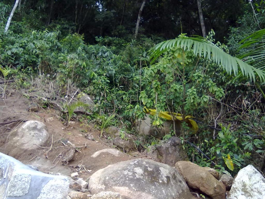 Terreno, Sambaqui, Florianópolis (TE0247) - Foto 3