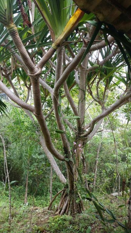 Terreno, Sambaqui, Florianópolis (TE0262) - Foto 12