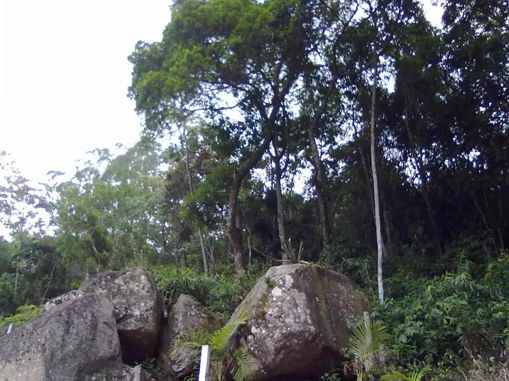 Terreno, Sambaqui, Florianópolis (TE0247) - Foto 7