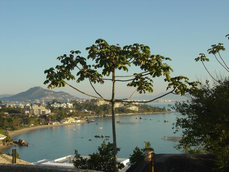 Terreno, Cacupé, Florianópolis (TE0105) - Foto 3
