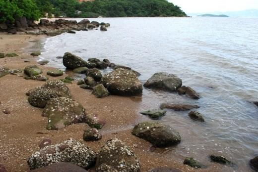 Terreno, Sambaqui, Florianópolis (TE0059) - Foto 17