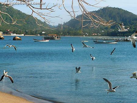 Terreno, Santo Antônio de Lisboa, Florianópolis (TE0112) - Foto 2