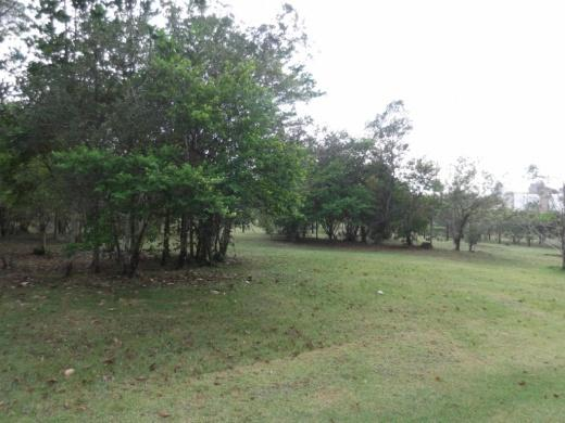 Terreno, Campeche, Florianópolis (TE0042) - Foto 8