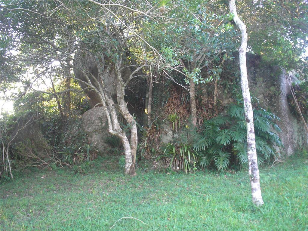 Terreno, Ratones, Florianópolis (AR0003) - Foto 6