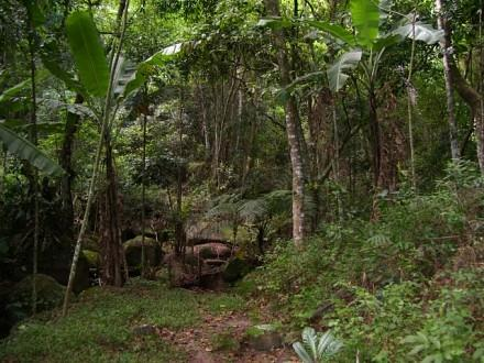 Terreno, Jurerê, Florianópolis (TE0187) - Foto 14