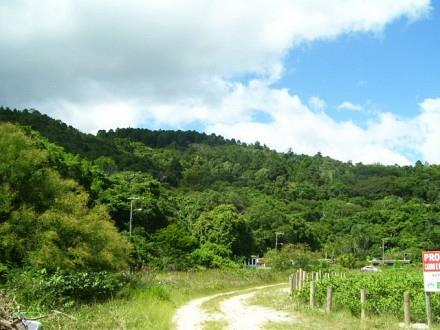 Terreno, Jurerê, Florianópolis (TE0187) - Foto 5