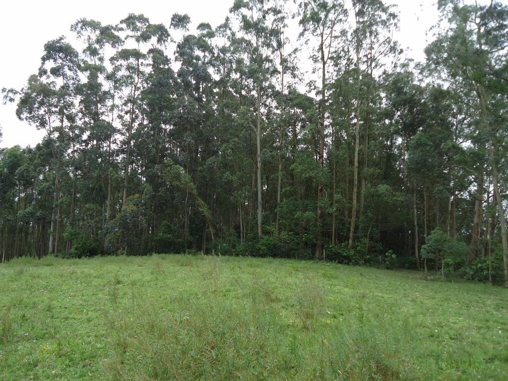Sítio de 4 dormitórios em Florescente, Viamão - RS