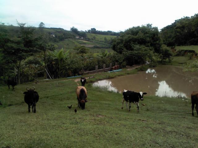 Sítio à Venda - Rio Abaixo