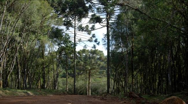 Terreno à venda em Caracol, Canela - RS