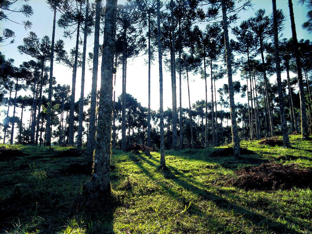 Terreno à venda em Gramado, Gramado - RS