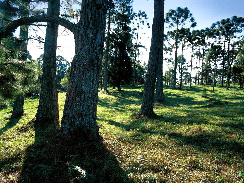 Terreno em Gramado, Gramado - RS
