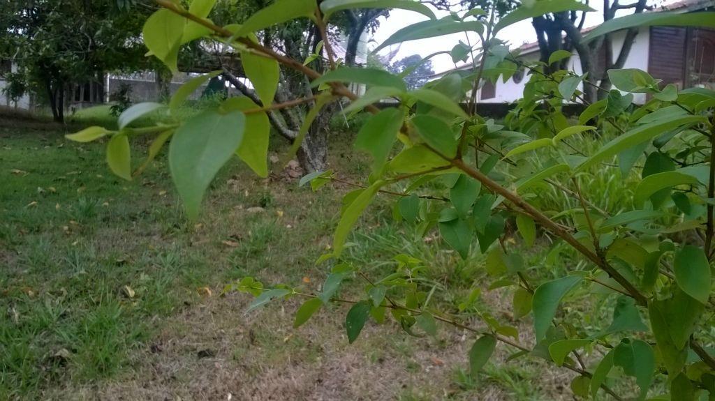 Terreno residencial à venda, Condomínio Vista Alegre - Sede, Vinhedo.