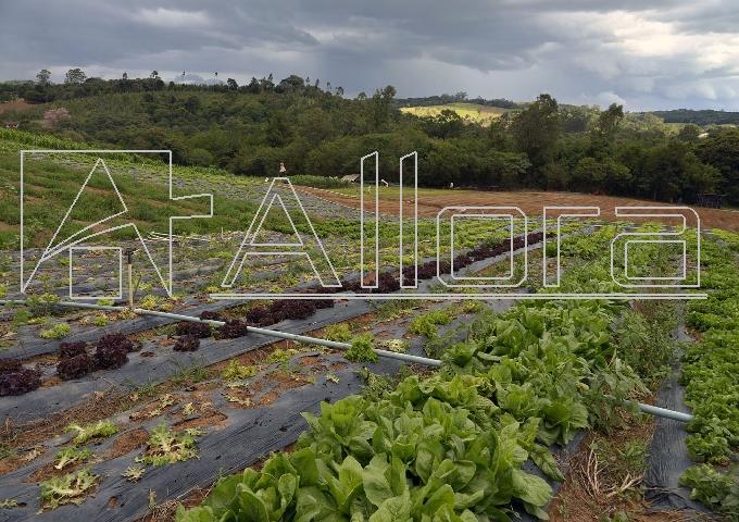 Sítio  rural à venda, Furquilha, Monte Alegre do Sul.
